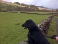 Staring at Sheep