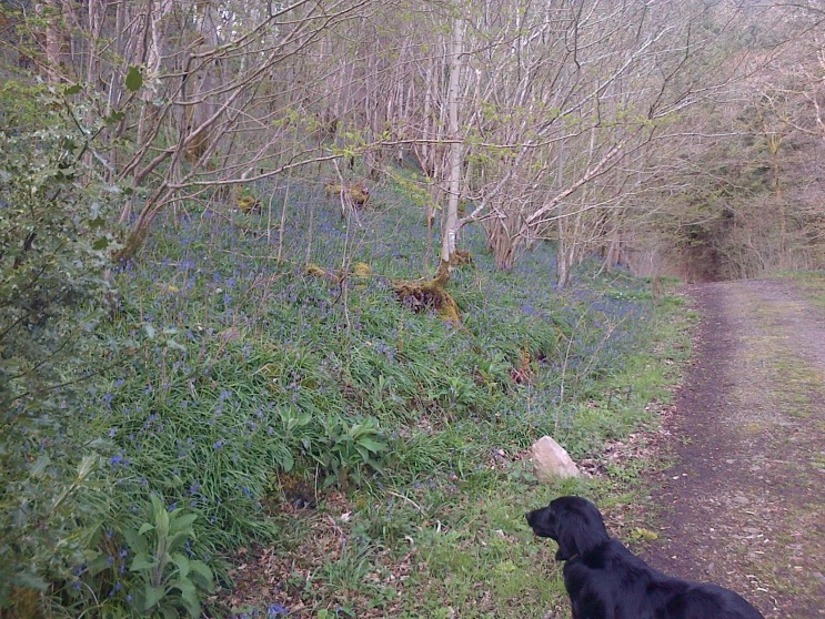 Eachann and the Bluebells