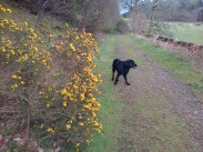 Eachann in the gorse